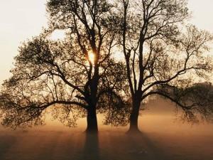 Pecora sotto un albero nel Dorset in Inghilterra.